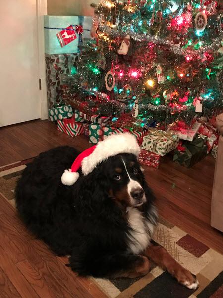 photo of Dennis Truax's dog, Bernie