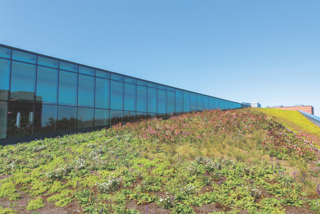 green roof of the Charles Library at Temple University
