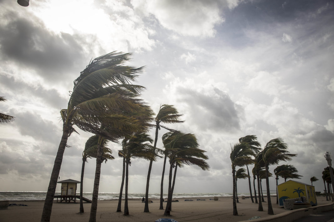 trees blowing in the wind on a beach during a hurricane