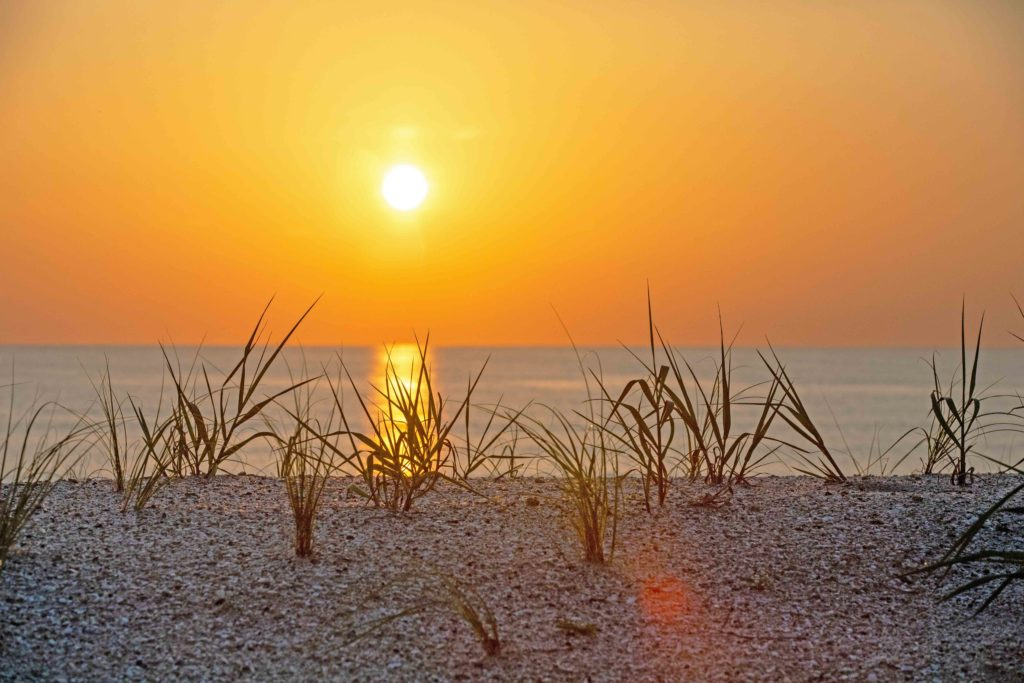 an orange sunrise seen over the water and through dune grasses